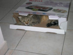 Chat Django in the box! -   ()