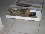 Chat Django in the box! -   (0 mois)