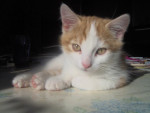 Chat hestia -   (0 mois)