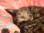 Chat ma chatte Candice -   (0 mois)
