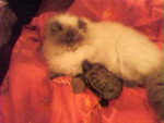 Chat Shadow et Freddy la tortue -   (0 mois)