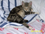 Chat Sookie -   (0 mois)