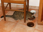 Chat tornade -   (0 mois)