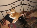 Chat Morris et Elga -   (0 mois)