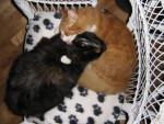 Chat Elga et Morris -   (0 mois)