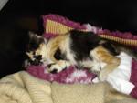 Chat Lilou, ma rescapée  -   (0 mois)