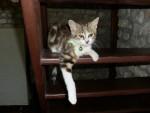 Chat Luna 8 mois -   (8 mois)