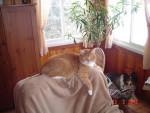 Chat Sammy est très fatigué -   (0 mois)