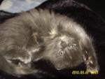 Chat Mon nouveau bébé! -   (0 mois)