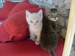 Chat Eros et Venus nés le 18 fevrier -   (0 mois)