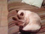 Chat mimine -   (0 mois)