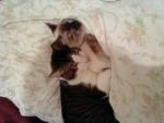 Chat mimine et couinou -   (0 mois)