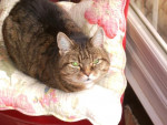 Chat Chloé-Picsou 17ans et toutes ses dents -   (0 mois)
