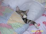 Chat Sookie en pleine sieste -   (0 mois)