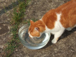 Chat nougat -   (0 mois)