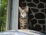 Chat félin....makita -   (0 mois)