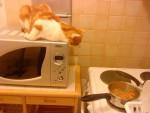 Chat hestia surveille la cuisson! -   (0 mois)