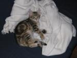 Chat Et Zed, alias Loulou ! -   (0 mois)