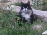 Chat Cachou femelle née en 1998 -   (0 mois)