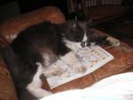 Chat Grisou mâle né en 1999 -   (0 mois)