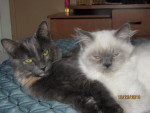 Chat Tiffany et Chany -   (0 mois)
