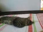 Chat chat de gouttière -   (0 mois)