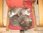 Chat chaussette croquette et leur petit frére -   (0 mois)