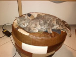 Chat croquette -   ()