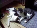 Chat Ben et Monoï -   (0 mois)
