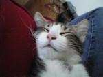 Chat ma ptite OCB d\'amour -   (0 mois)