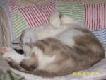 Chat Spike en plein sommeil -   (0 mois)