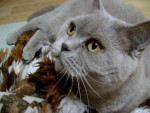 Chat Mon gros  -   (0 mois)