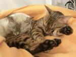 Chat Kiki et Luna -   (0 mois)