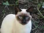 Chat douce Louna ! -   (0 mois)