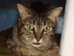 Chat chat de gouttiére -   (0 mois)