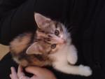 Chat ma Foufi -   (0 mois)