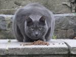 Chat gros matou 002.jpg -   (0 mois)