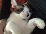 Chat Féline -   (0 mois)