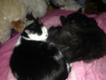Chat Chipie et Plumeau -   (0 mois)