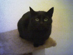 Chat Hello ! Mabelle ! -   (0 mois)