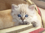 Chat  -   (0 mois)