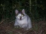Chat romeo -  Femelle (3 mois)