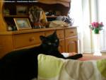 Chat Ana (la vraie) -  Femelle (4 ans)