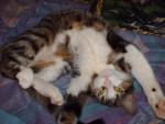 Chat Eidy -  Femelle (2 ans)