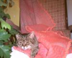 Chat Frisquette -  Femelle (15 ans)