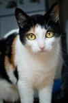 Chat Yume le chat curieux -  Femelle (4 ans)