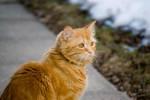 Chat Maru prend du soleil -  Mâle (9 mois)