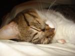 Chat Luna -  Femelle (3 ans)