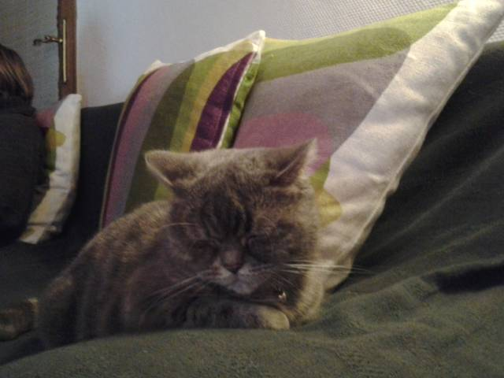 Chat louna -  Femelle (3 ans)