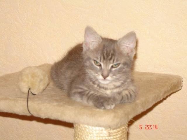 Chat tronion chat de goutiere -   (0 mois)